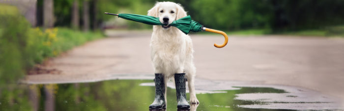 Heerlijk hondenweer