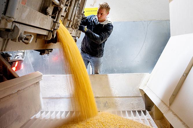 Mais ingrediënten binnenkomst in CaroCroc fabriek voor hondenbrokken en kattenbrokken