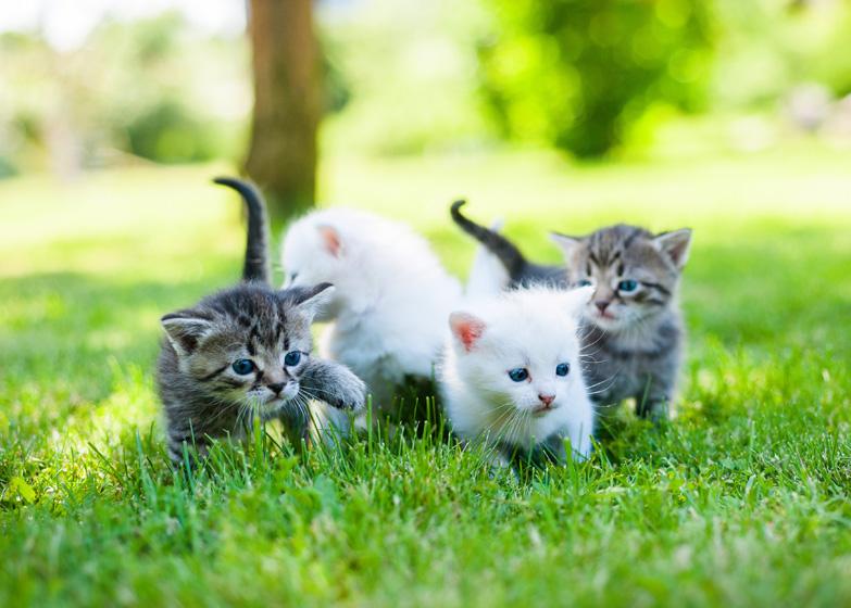 Groep gestreepte en witte kittens op gras