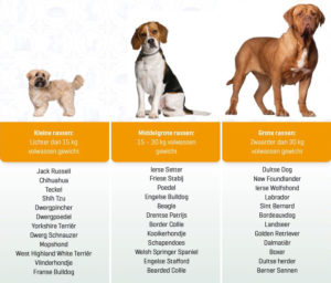 Kleine, middelgrote en grote hondenrassen overzicht