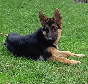 Runa Puppy Large