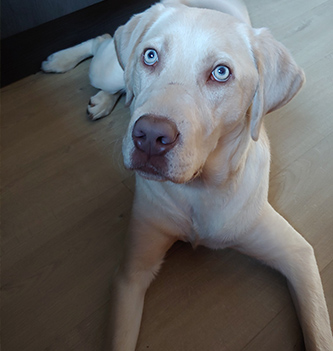 Sjors Puppy Large