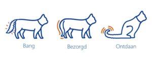 Iconen angstige katten lichaamstaal