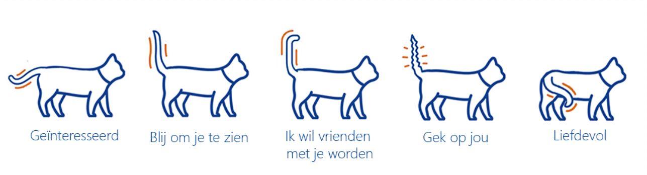 Icoon kat ontspannen gemoedstoestrand lichaamstaal