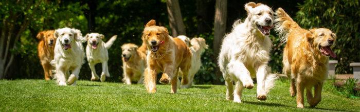 Hondenspeeltuinen in Nederland