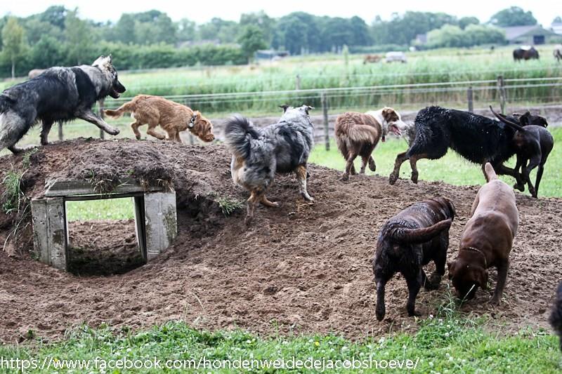 Honden spelen en rennen samen in hondenspeeltuin op veld