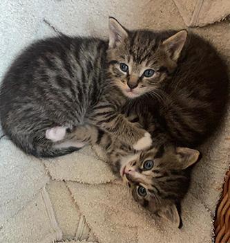 Mies en Moos Kitten