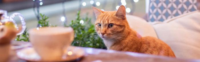 Kattencafés in Nederland