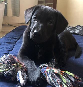 Kira Puppy