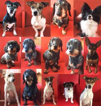 Micky, Shailo, Luna, Gizmo, Fleur, Jip, Joep, Teun, Gijs, Saar, Bruno, Noor, Yara en Puck Small Breed