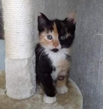 Ivy Kitten