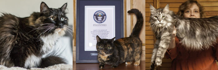Bijzondere katten records