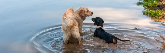 Populaire hondenrassen en hun karakter