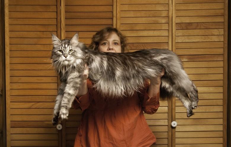Vrouw houdt langste grootste kat ter wereld vast guinness record