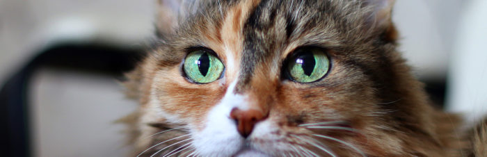 Hoe katten de wereld zien