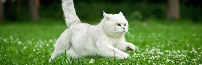 Overstappen van kitten- op volwassen voer
