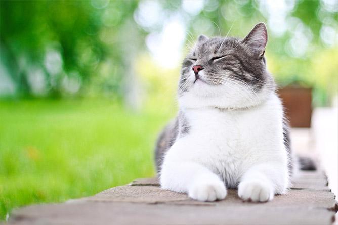 Kat genietend in het groen