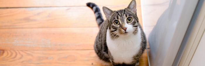 Hoe train je een kat?