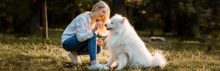 8 tips om het trainen van jouw hond een succes te maken