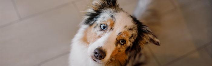 Wat mogen honden wel en niet eten?